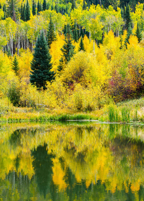 Autumn Reflections - Grand Mesa National Forest, Colorado
