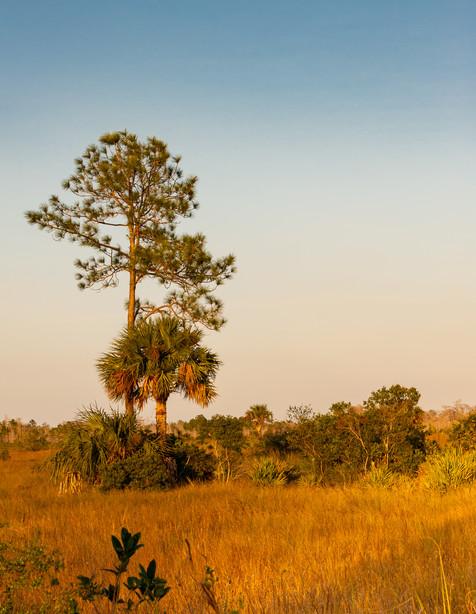 Sunset on the Everglades - Everglades National Park, Florida