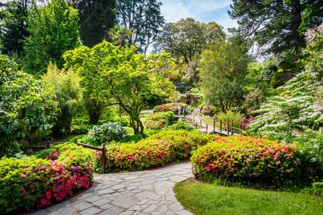 Japanese Garden - Powerscourt, Gardens, County Wicklow