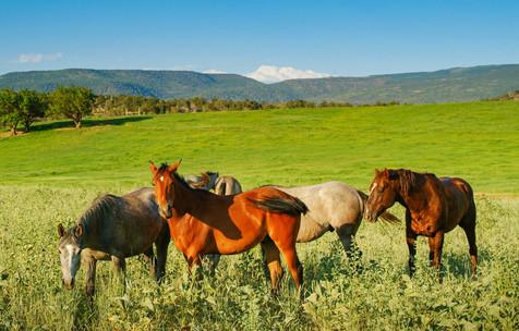 Horses in Spring - Silt, Colorado