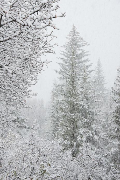Snow Storm - Hummingbird Knob, Colorado