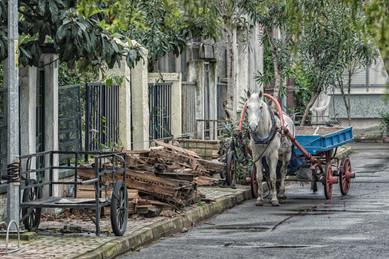 The Horses of the Princes' Islands - Buyukada, Turkey