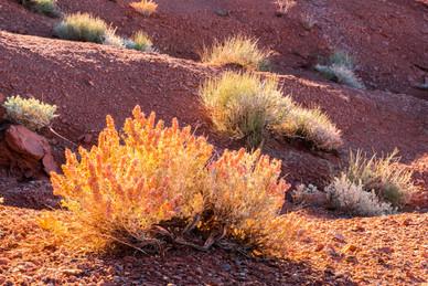 Spring Sunrise in the Desert - Utah
