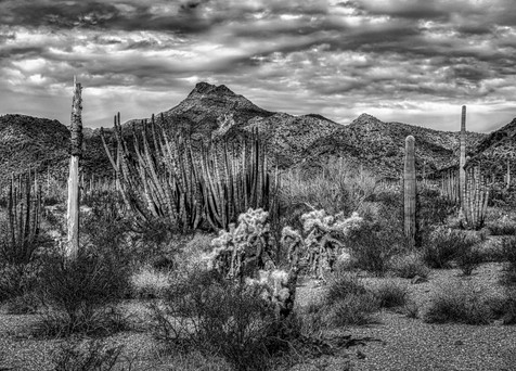 Organ Pipe NM in Black and White