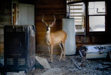 Bucks Refuge - Western Colorado