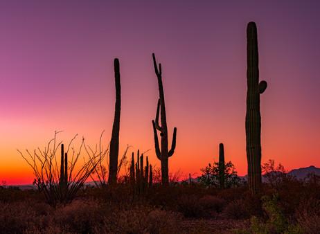 Pre-dawn Light and Cactus
