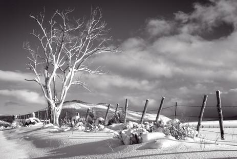 Cottonwood and Snow - Western Colorado