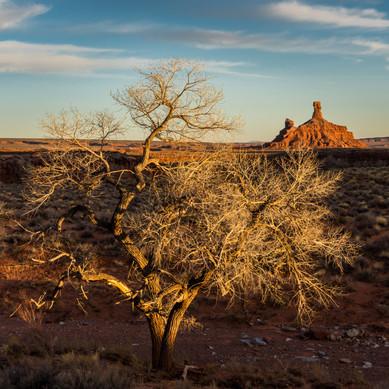 Winter in the Southern Utah Desert -Utah