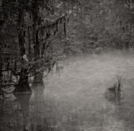 Fog and Cypress - Fairview Riverside State Park, Louisiana