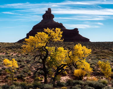 Butte and Cottonwood in the Fall - Utah