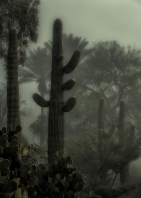 Foggy Saguaro 2 - Scottsdale