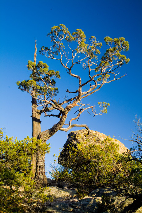 Cedar and Boulder - Chiracauhua National Monument
