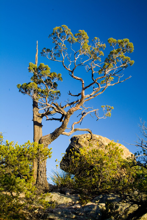 Cedar and Boulder - Chiracauhua National Monument