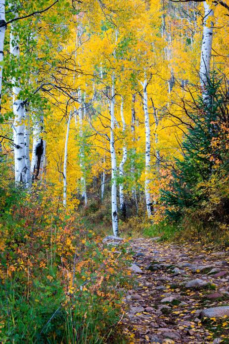 A Trail Into Fall Color - Sylvan Lake State Park, Colorado