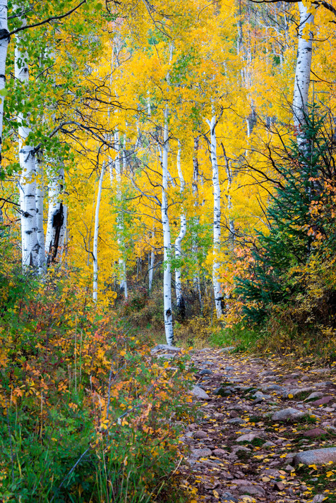A Trail Into Fall Color - Sylvan Lake State Park, Colorado