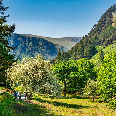 In the Wicklow Mountains - Glendalough, County Wicklow