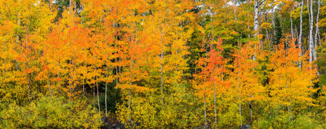 The Many Shades of Autumn - Grand Mesa National Forest
