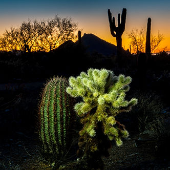 Cholla and Barrel Cactus with silhouetted saguaro and mountains before dawn along Lost Dog Wash - travel photography - Scottsdale, Arizona.jpg