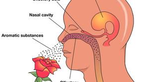 Aromatherapy Rocks... The Brain!