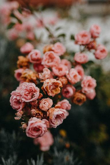 © Foxografie_Winter Rose_Nov2020