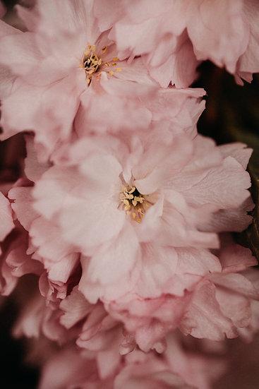 Pink Poesy
