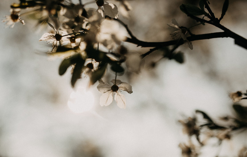 Spring lights