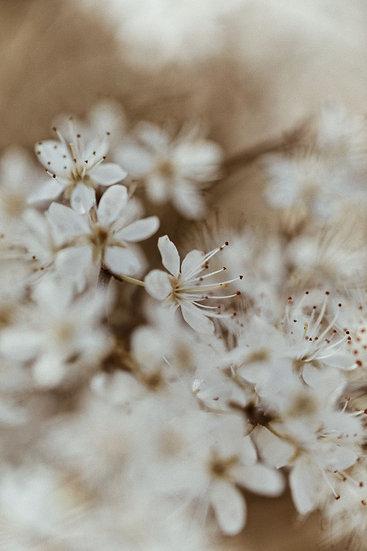 My Vintage Flowers II