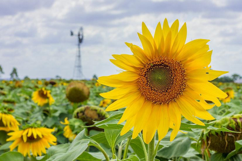 Rural Bloom