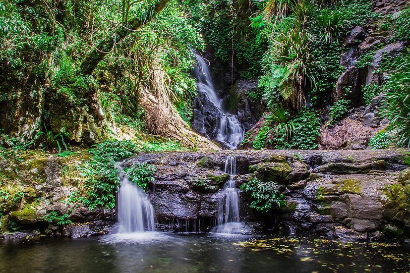 Tropical Cascades