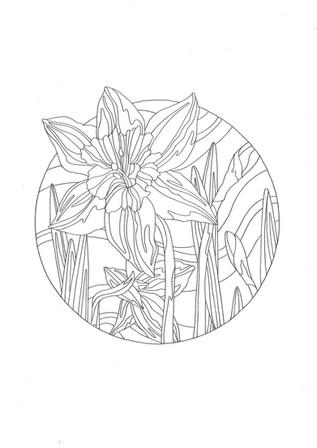 Daffodil (2017)