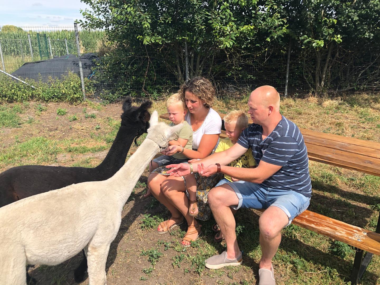Alpaca ontmoeting