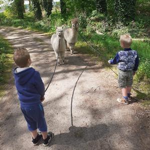 Alpaca wandeling