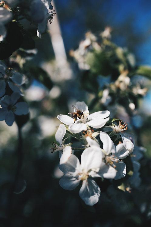 "POSTCARD ""Busy Bee"""