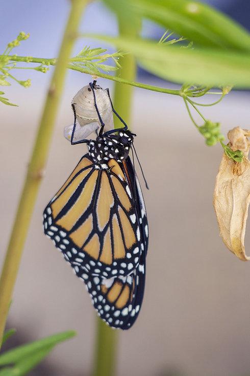 butterfly-4043540_1920.jpg