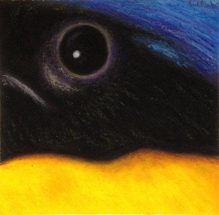 Rufous-bellied Niltava