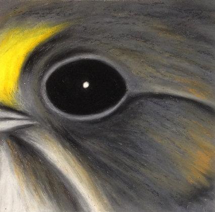 Seaside Sparrow