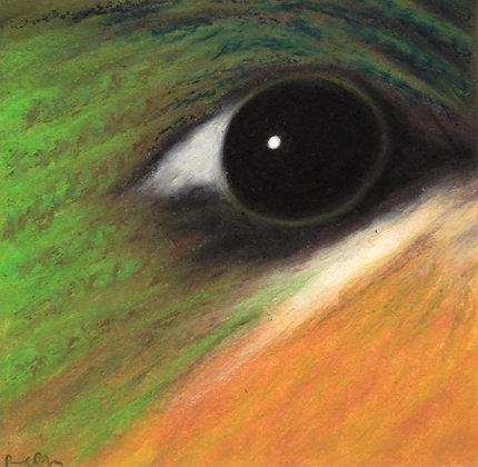 Brazilian Ruby-throat Hummingbird