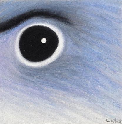Kestrel Gnatcatcher