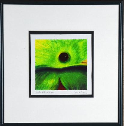 Quatzal (male)
