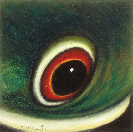 Red-eyed Tree Frog III