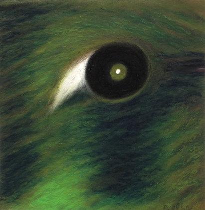 Cuban Emerald Hummingbird