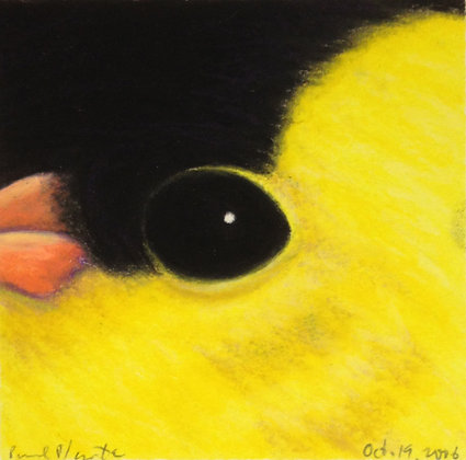 American Goldfinch II