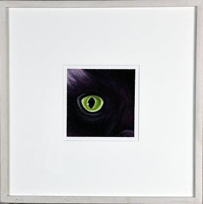 Oriental Longhair (black cat)
