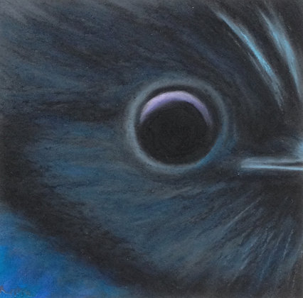 Stellar's Jay
