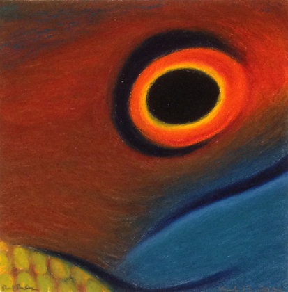 Diana's Hogfish (Bodianus diana)