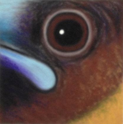 Sharp-tailed Munia