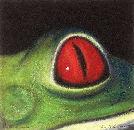 Red-eyed Tree Frog II