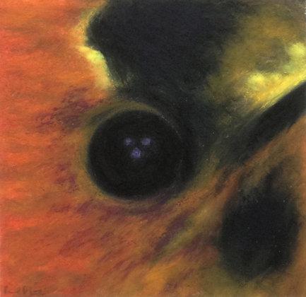 Juan Fernandez Firecrown (male)