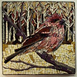 Purple Finch 2