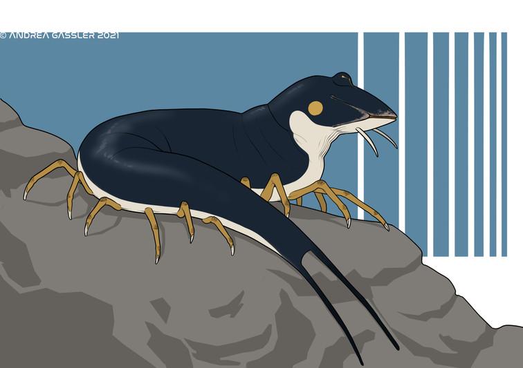 Sealworm
